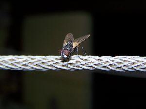 how to kill fruit flies
